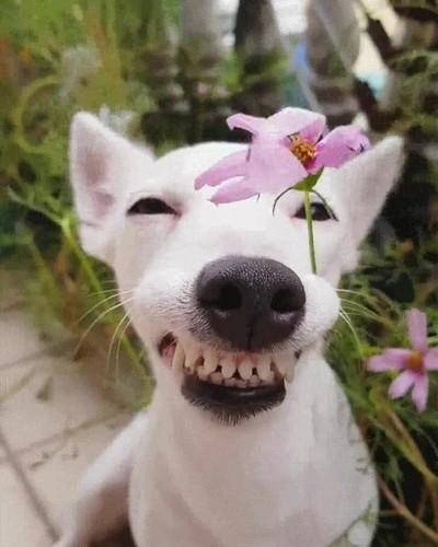 Enlace a Cuando le das una flor a la chica que te gusta y pones una cara extraña