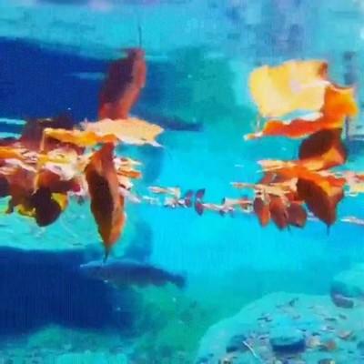 Enlace a Paisajes que son más bonitos cuando los miras debajo del agua