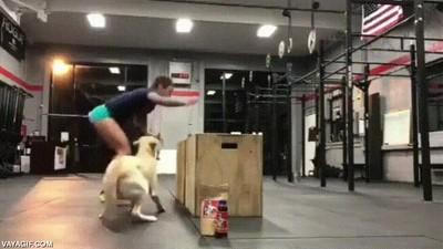 Enlace a No hay mejor compañero de gimnasio que tu perro