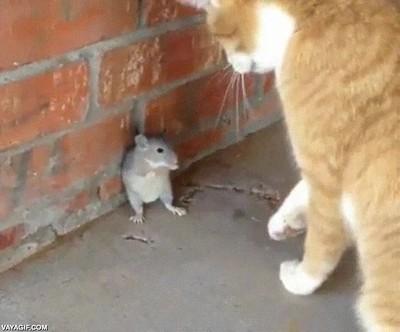 Enlace a Así serían Tom & Jerry en la vida real