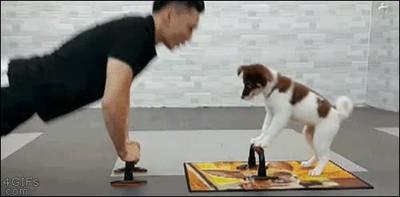 Enlace a Perros que imitan todo lo que hacen sus amos