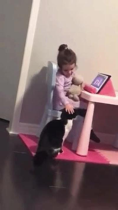Enlace a Gatos celosos de las nuevas tecnologías