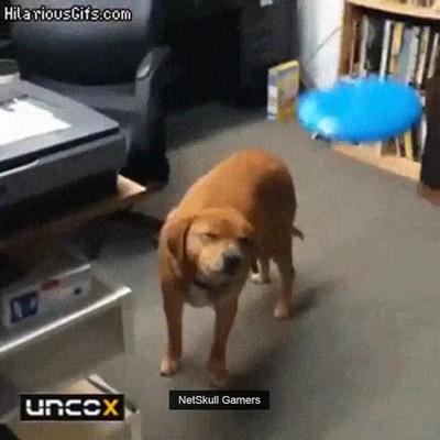 Enlace a Perros que están en un nivel de consciencia superior y pasan de juegos