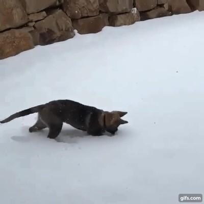 Enlace a La reacción de un cachorro al ver la nieve por primera vez en su vida