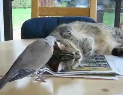 Enlace a El típico colega pesado que no te deja hacer la siesta