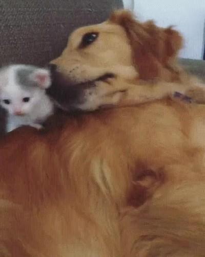 Enlace a Perros y gatos que deciden ser los mejores amigos