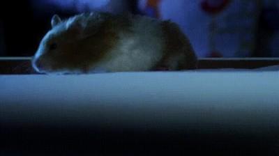 Enlace a Hamsters utilizando el ascensor, como personas civilizadas