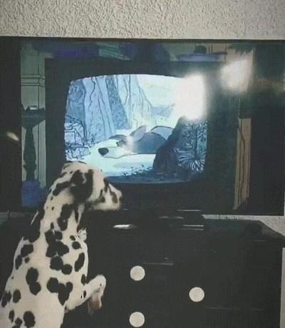 Enlace a Esta es la película favorita de este perro tan adorable