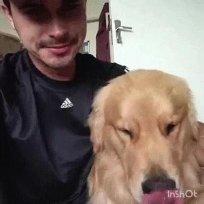 Enlace a Perros perfectamente sincronizados con su humano