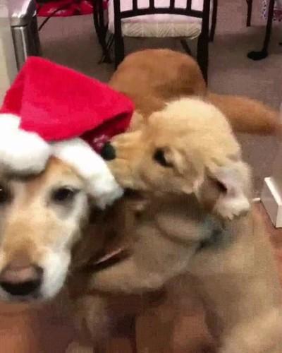 Enlace a En toda casa hay alguien que no soporta la navidad