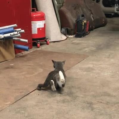 Enlace a Gatos haciendo yoga. Ya lo he visto todo en esta vida