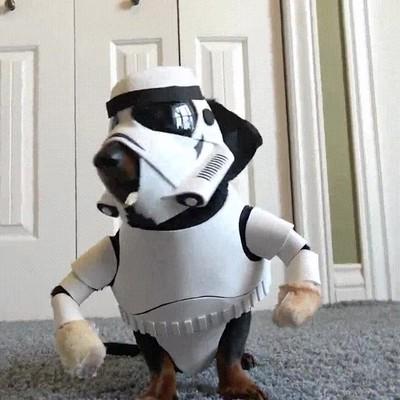 Enlace a El perro más fan de Star Wars ya está preparado para ver la nueva peli