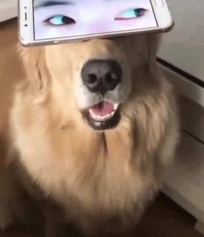 Enlace a Así serían los perros si tuviesen ojos humanos
