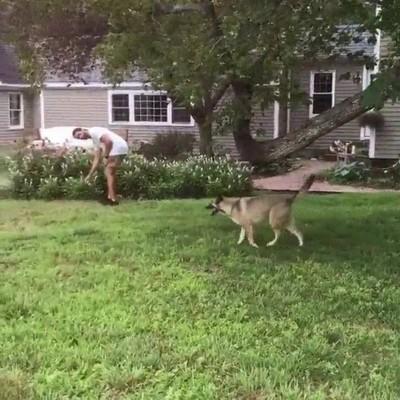 Enlace a Perro escalando un árbol para recuperar su juguete