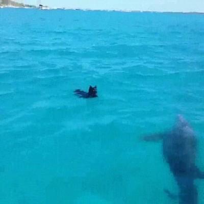 Enlace a ¿Quién dijo que delfines y perros no podían ser los mejores amigos?