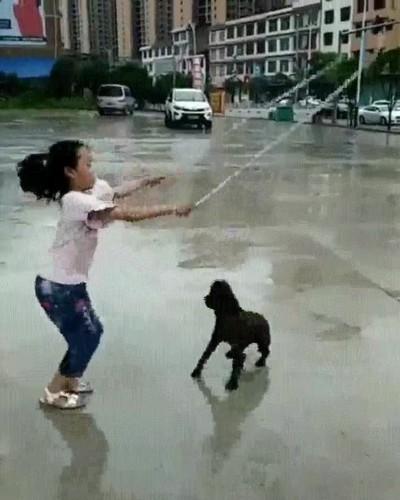 Enlace a Perros que se pasarían el día entero saltando a la comba