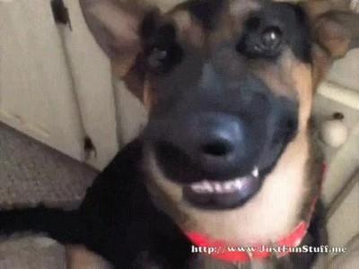 Enlace a Perros que actúan como cualquiera de nosotros cuando nos hacemos una selfie