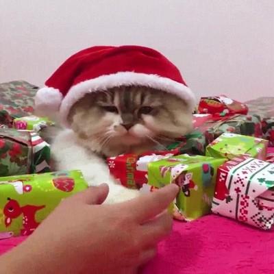 Enlace a ¡No toques mis regalos navideños!