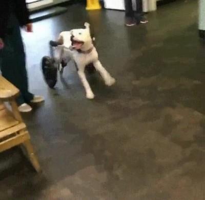 Enlace a La felicidad de un perro al ver que puede seguir corriendo