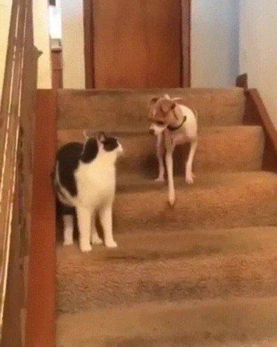 Enlace a Cuando sin querer activas el modo turbo del perro