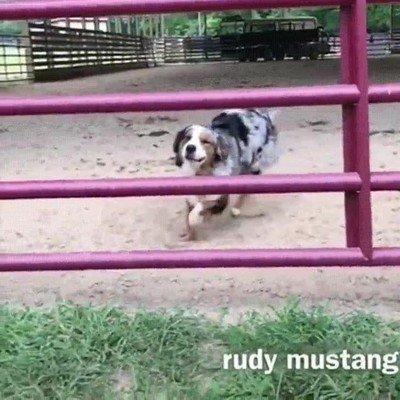 Enlace a Este perro tiene una habilidad innata para el parkour