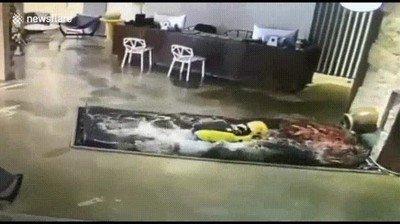 Enlace a Cuando el repartidor confunde la piscina con una alfombra