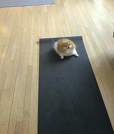 Enlace a Perros emocionados en su primera clase de yoga