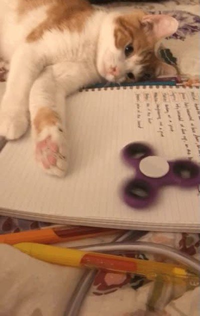Enlace a Gatos que también se han enganchado a los spinners
