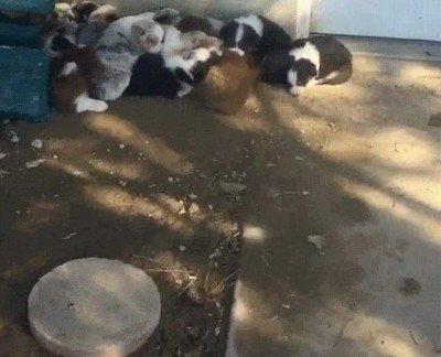 Enlace a Lo que se siente al despertar a 18 cachorros al mismo tiempo
