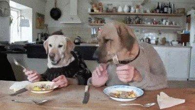 Enlace a Todos los perros desayunan así cuando nadie está mirando