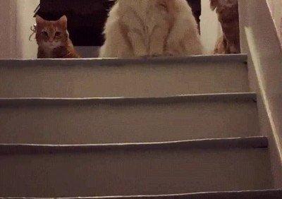 Enlace a Cuando llegas tarde a casa y todos tus gatos te están juzgando
