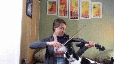 Enlace a Tener un gato a veces no te permite ensayar pero merece la pena