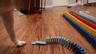Enlace a Perros que alucinan cuando hipnóticamente se derriban las piezas de domino