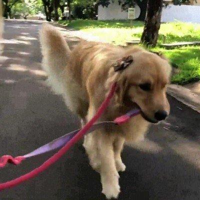 Enlace a Perros que pasean de forma romántica con su pareja