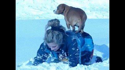 Enlace a Perros que se niegan a tener cualquier contacto con la nieve