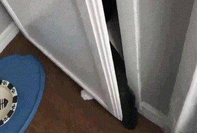 Enlace a Cuando pillas a tu gato con las manos en la masa