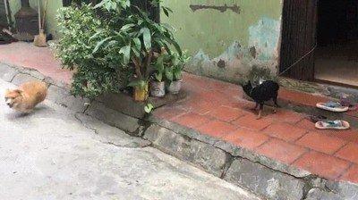 Enlace a Lo que hace este perro es crueldad de la buena