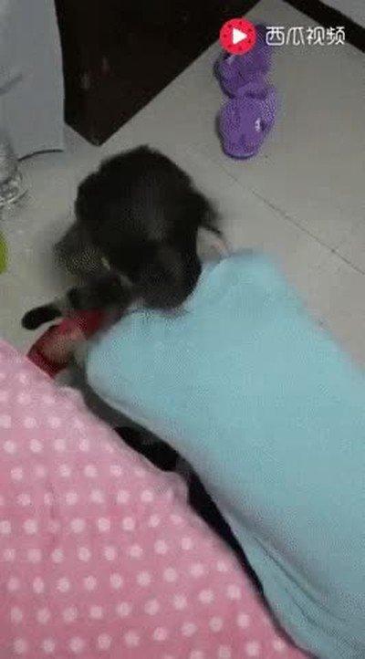 Enlace a Uno de los gatos más perezosos que he visto en mucho tiempo
