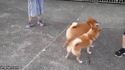 Enlace a Perro usó ataque con el trasero. Es súper efectivo