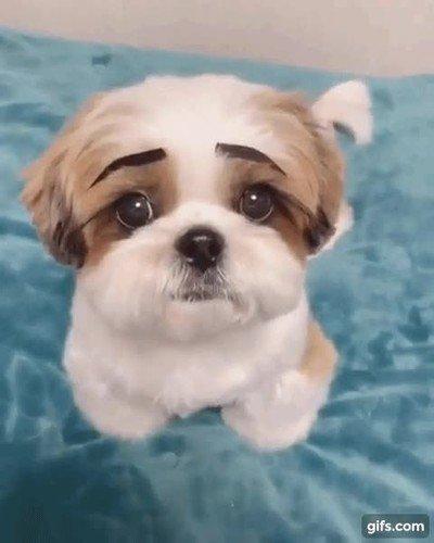 Enlace a Si los perros tuvieran cejas sería mucho más complicado decirles que no