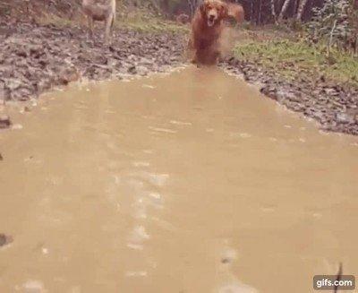 Enlace a Para un perro un charco de barro es lo mejor del mundo