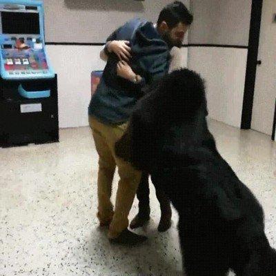 Enlace a Perro celoso del novio de su humana