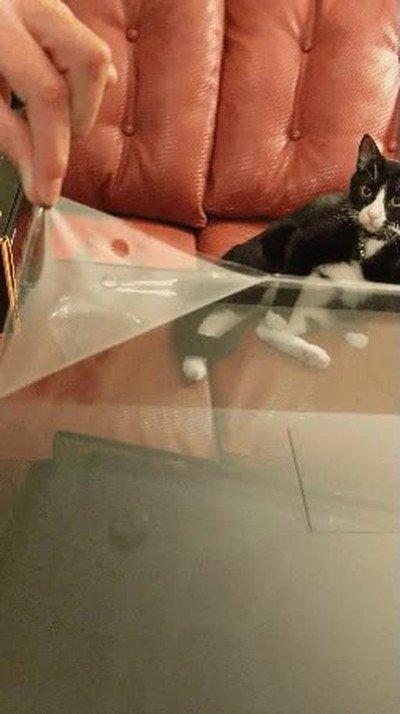 Enlace a Gatos que se quedan flipando cuando compras un mueble nuevo