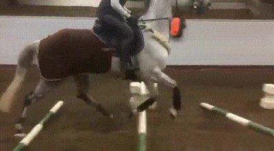 Enlace a Este caballo aún tiene que entrenar mucho para competir