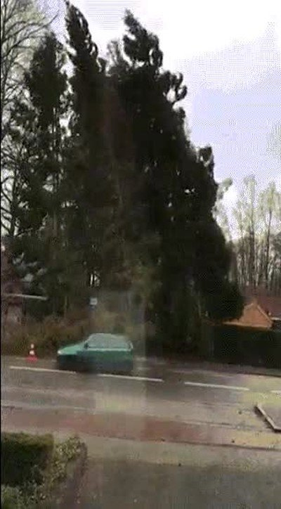 Enlace a Un coche esquivando un árbol cayéndose en el último segundo