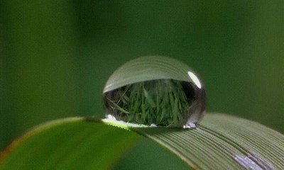 Enlace a Así se evapora una gota de agua
