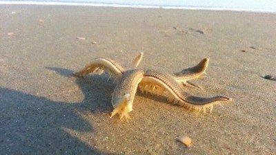 Enlace a Esta estrella de mar caminando me representa los domingos por la mañana
