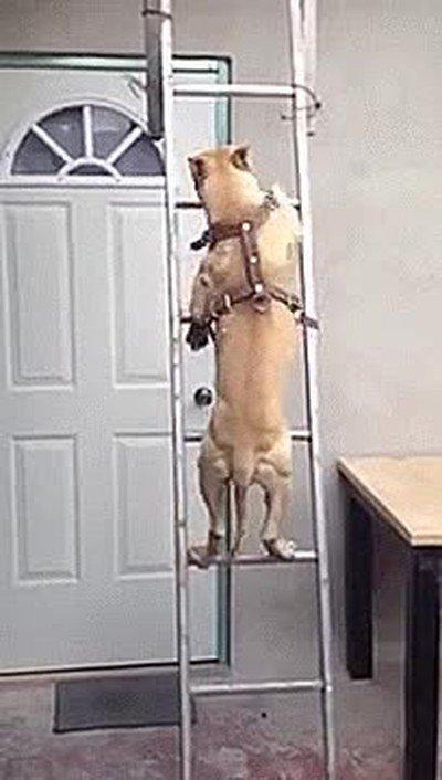 Enlace a Perros que han aprendido a subir escaleras