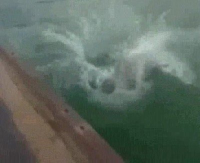 Enlace a Cuando te tiras al agua y sin querer desafías todas las leyes de la física