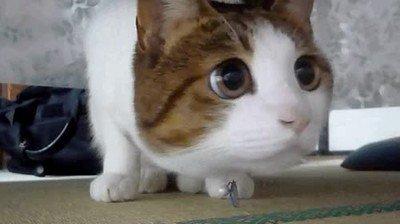 Enlace a Mueve el cursor del mouse para que parezca que lo siga con la mirada